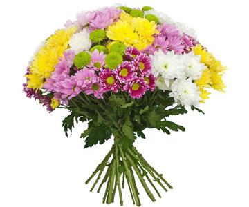Хризантемы с доставкой на дом